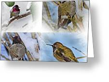 Humming Bird And Snow 4 Pack Greeting Card