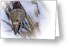 Humming Bird And Snow 5 Greeting Card
