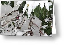 Humming Bird And Snow Greeting Card