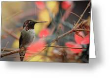 Humming Bird Christmas Greeting Card