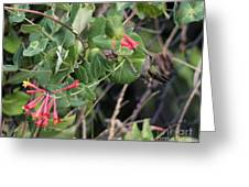 Humming Bird Perching On Vine Greeting Card