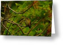 Humming Birds Perched  Greeting Card