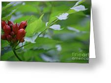 Humming Buds By Jammer Greeting Card