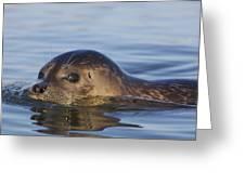 Humming Harbor Seal Greeting Card