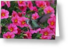 Hummingbird 3219 Greeting Card
