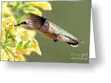 Hummingbird 3725 Greeting Card
