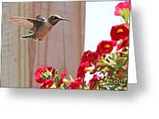 Hummingbird 4533 Greeting Card