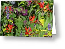 Hummingbird And Crocosmia Lucifer Greeting Card