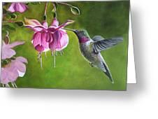 Hummingbird And Fuschia Greeting Card