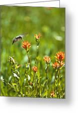 Hummingbird And Paintbrush Flower Greeting Card