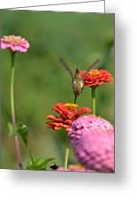 Hummingbird And Zinnias Greeting Card
