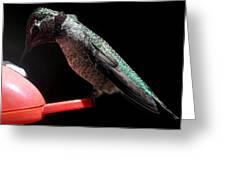 Hummingbird Anna's Eating On Perch Greeting Card