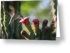 Hummingbird Breakfast Southwest Style Photograph By Saija