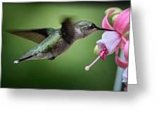 Hummingbird Carbs Greeting Card