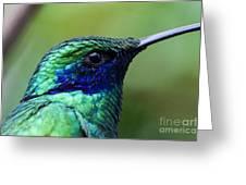 Hummingbird Closeup Greeting Card