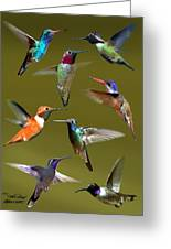 Hummingbird Collage Greeting Card