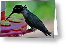 Hummingbird Costa's At The Feeder Greeting Card
