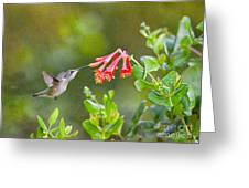 Hummingbird Dives In  Greeting Card