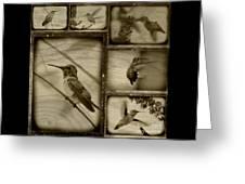 Hummingbird Family Portraits Greeting Card