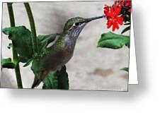 Hummingbird Feeding Greeting Card