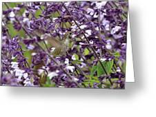 Hummingbird Flowers Greeting Card