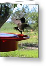 Hummingbird Flying To The Feeder Greeting Card