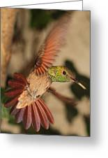 Hummingbird I Greeting Card