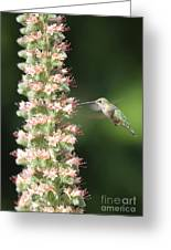 Hummingbird In Burbank Garden Greeting Card