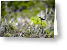 Hummingbird In Green Greeting Card