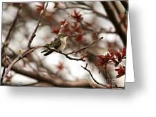 Hummingbird In Spring Greeting Card