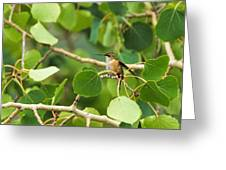 Hummingbird In Tree Greeting Card
