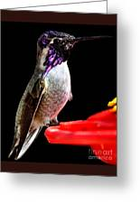 Hummingbird Male Anna Greeting Card