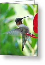 Hummingbird Male Ruby Throated  Greeting Card