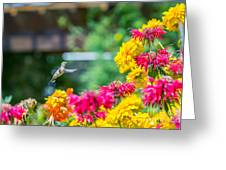 Hummingbird Moment Greeting Card