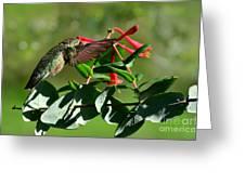 Hummingbird Morning Greeting Card