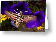 Hummingbird Moth   #8612 Greeting Card