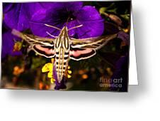 Hummingbird Moth   #8645 Greeting Card
