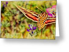 Hummingbird Moth In Wildflowers Greeting Card by Pam Vick
