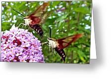 Hummingbird Moths Greeting Card