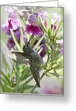 Hummingbird On A Desert Willow Greeting Card