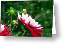 Happy Hummer Greeting Card