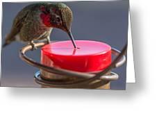 Hummingbird On Feeder Greeting Card