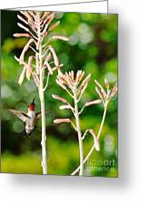 Hummingbird Pink Green - Floating Hummingbird Flashes Red Greeting Card