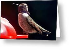 Hummingbird Posing On Perch Greeting Card