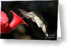 Hummingbird Sigh Greeting Card