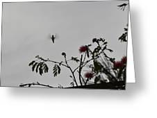Hummingbird Silhouette I Greeting Card