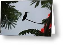 Hummingbird Silhouette Greeting Card