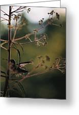 Hummingbird Silouette Greeting Card