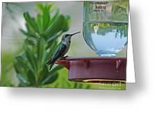 Hummingbird Still Life Greeting Card
