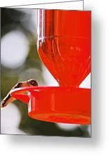 Hummingbird With Globes Greeting Card